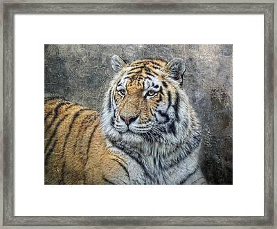 Panthera Tigris Framed Print by Joachim G Pinkawa