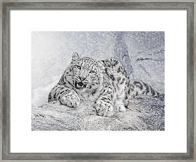 Panthera Uncia Framed Print