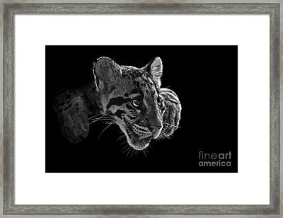 Panting Beauty Framed Print by Ashley Vincent
