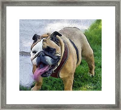 Panting Lady Bulldog Digital Framed Print