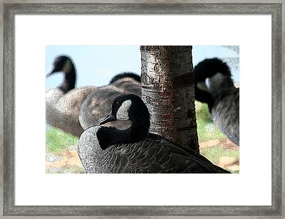 Framed Print featuring the photograph Pap Daddy Big Spring Park by Lesa Fine