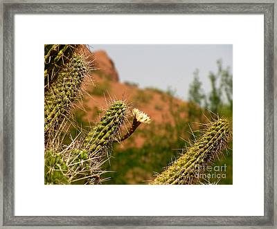 Papago Peak Perfection Framed Print by Marilyn Smith