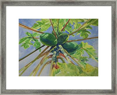 Papaya Framed Print