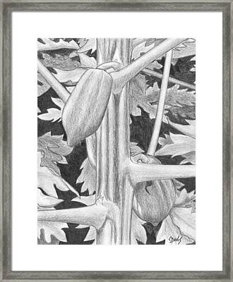 Papaya Framed Print by Lew Davis