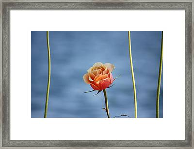 Framed Print featuring the photograph Papaya's World by The Art Of Marilyn Ridoutt-Greene