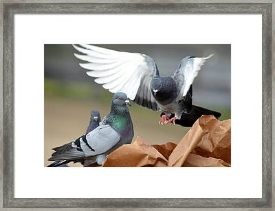 Paper Bag Pigeons 2 Framed Print by Fraida Gutovich
