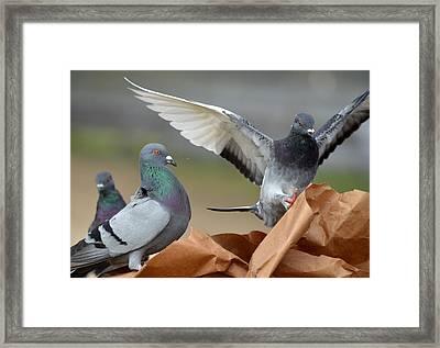 Paper Bag Pigeons 3 Framed Print by Fraida Gutovich