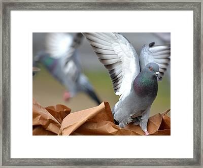 Paper Bag Pigeons Framed Print by Fraida Gutovich