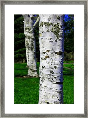 Aaron Berg Photography Framed Print featuring the photograph Paper Birch Trees by Aaron Berg