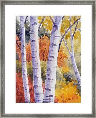 Paper Birches In Autumn Framed Print