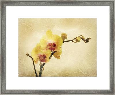 Paper Flowers Framed Print by Donna Blackhall