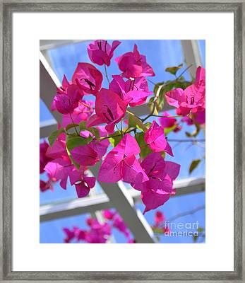 Paper Flowers Framed Print by Kathleen Struckle