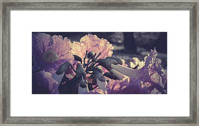 Paper Flowers - Purple Framed Print