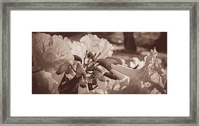 Paper Flowers - Sepia  Framed Print