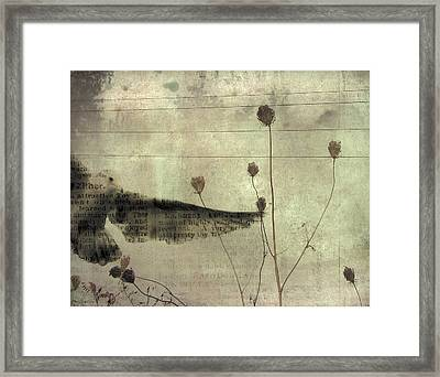 Paper Gull Framed Print by Gothicrow Images