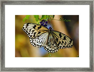 Paper Kite Butterfly Framed Print by Aimee L Maher Photography and Art Visit ALMGallerydotcom