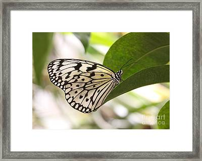 Framed Print featuring the photograph Paper Kite On A Leaf by Ruth Jolly