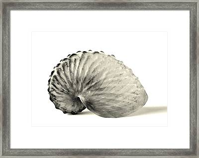 Paper Nautilus Shell Framed Print
