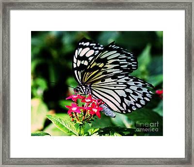 Paper White Butterfly Framed Print by Sandra Clark