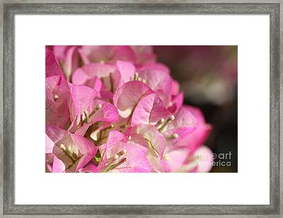 Papery In Pink Framed Print by Cathy Dee Janes
