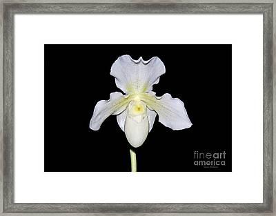 Paphiopedilum Orchid F.c. Puddle Superbum  Framed Print by Susan Wiedmann
