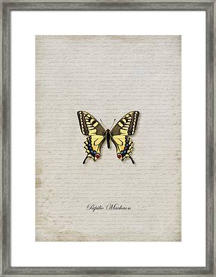 Papilio Machaon Butterfly Framed Print by Lee Craggs