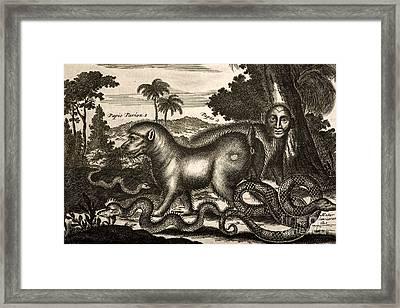 Papio And Man-headed Beaast, 1673 Framed Print by Paul D. Stewart