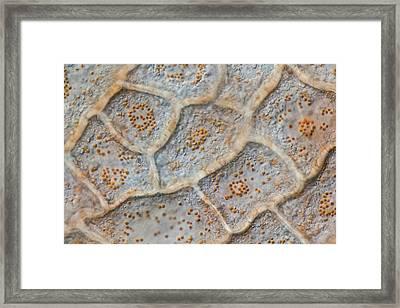Paprika Pulp Cells Framed Print