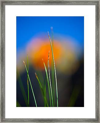 Papyrus Framed Print by Joe Schofield