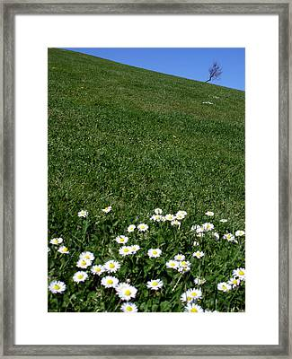 Paquerette Solitary Tree Framed Print by Michel Mata