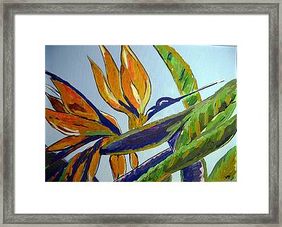 Paradise Bird Flower Framed Print
