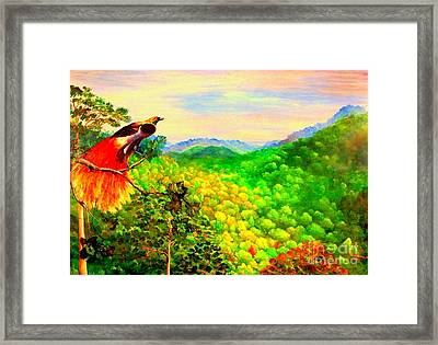 Paradise Bird Of Papua Framed Print
