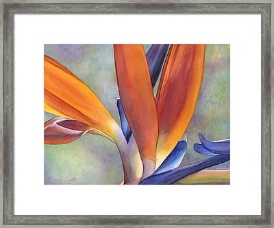 Paradise Bird Framed Print by Sandy Haight