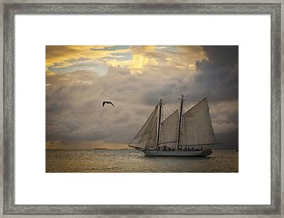 Paradise Calling Framed Print