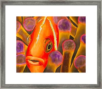 Paradise Clownfish Framed Print by Daniel Jean-Baptiste