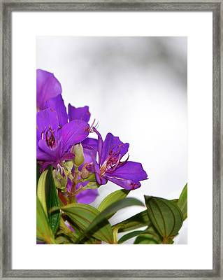 Paradise Found - Floral Photography By Sharon Cummings Framed Print