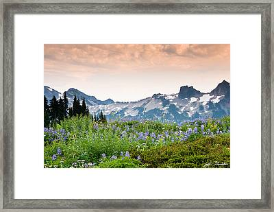 Paradise Meadows And The Tatoosh Range Framed Print
