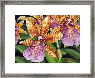 Paradise Orchid Framed Print