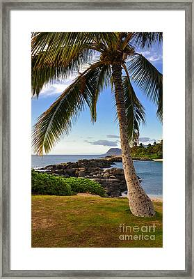 Framed Print featuring the photograph Paradise Palm by Gina Savage