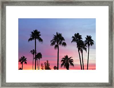 Paradise Palm Tree Sunset Sky Framed Print by James BO  Insogna