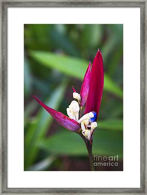Framed Print featuring the photograph Paradise Unfolding by Rafael Quirindongo