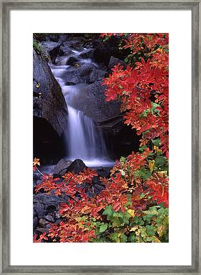 Paradise Valley Stream In Fall Framed Print by Ken Dietz