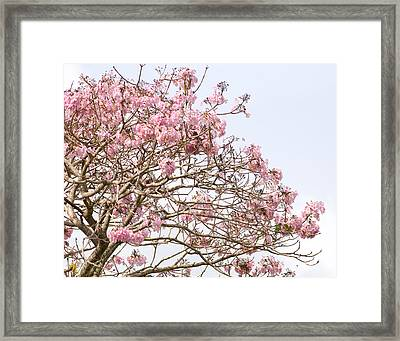 Parakeets Hiding In The Flowers Framed Print
