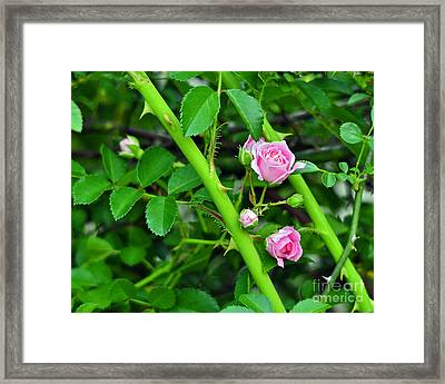 Parallel Vines Framed Print by Al Powell Photography USA