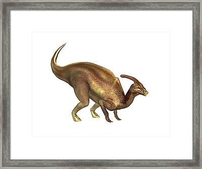 Parasaurolophus Dinosaur Framed Print by Friedrich Saurer