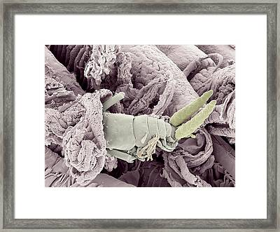 Parasitic Copepod Framed Print