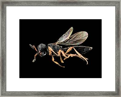 Parasitic Wasp Framed Print by Us Geological Survey