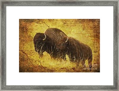 Parent And Child - American Bison Framed Print by Lianne Schneider