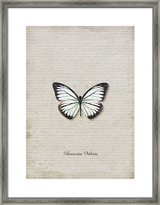 Pareronia Valeria Butterfly Framed Print by Lee Craggs