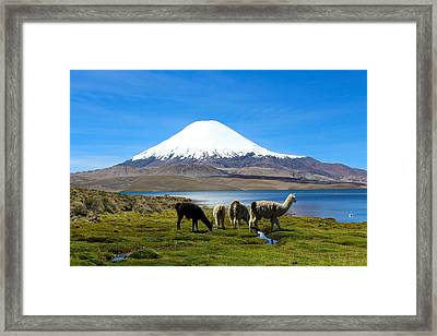 Parinacota Volcano Lake Chungara Chile Framed Print by Kurt Van Wagner